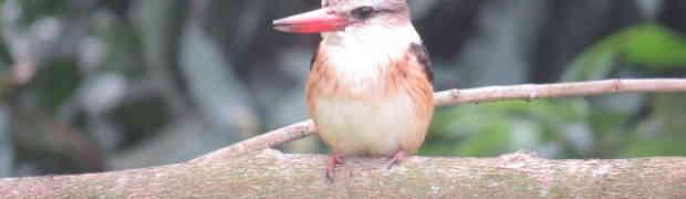 Birding Lite