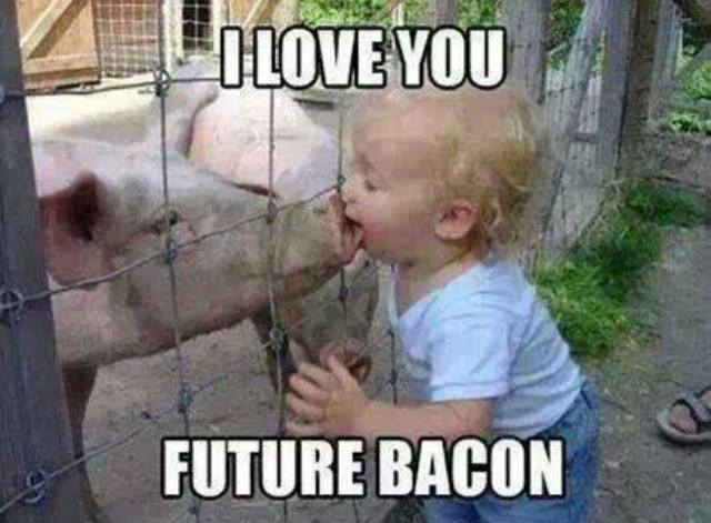 "internet meme of toddler kissing pig ""I love you future bacon"""