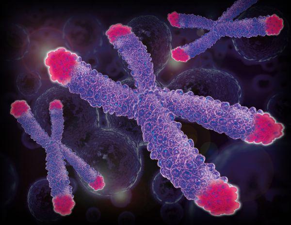 telomeres image
