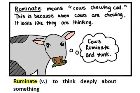 cow ruminate